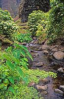 Nualolo Stream in Nualolo Aina Valley, Na Pali Coast State Park, Kauai, with wild taro, watercress, etc.