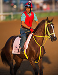 Yara during morning workouts for the 138th Kentucky Oaks at Churchill Downs in Louisville, Kentucky on May 3, 2012.