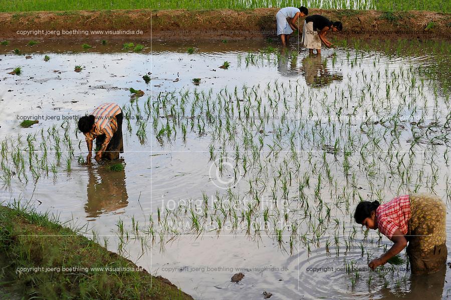 SRI LANKA, Trincomalee, women replant rice in paddy field / Frauen pflanzen Reis