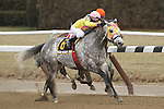 Head Heart Hoof (NY) with Cornelio Velasquez wisn the 120th running of the Grade 3 The Toboggan Stakes for 3-year old & ups, going 6 furlons on the inner dirt, at Aqueduct Racetrack.  Trainer Rudy Rodriguez.  Owners Michael Dubb, Stuart Grant, Gary Aisquith