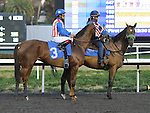 December 10, 2011.Lady Pecan approaching the starting gate before the Hollywood Starlet at Hollywood Park, Inglewood, CA