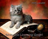 Xavier, ANIMALS, REALISTISCHE TIERE, ANIMALES REALISTICOS, cats, photos+++++,SPCHCATS900,#a#, EVERYDAY