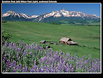 Sunshine Peak (left) and Wilson Peak (14017 ft) with Lupine flowers and settler's barn, Telluride, Colorado.