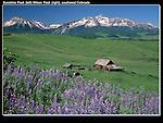 Sunshine Peak (left) and Wilson Peak (14017 ft) with Lupine flowers and settler's barn, Telluride, Colorado.