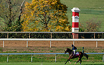 November 1, 2020: Royal Approval, trained by trainer Wesley A. Ward, exercises in preparation for the Breeders' Cup Juvenile Fillies Turf at Keeneland Racetrack in Lexington, Kentucky on November 1, 2020. Scott Serio/Eclipse Sportswire/Breeders Cup /CSM