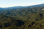 Coniferous forest covering mountains, Santa Cruz Mountains, Monterey Bay, California