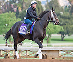 October 26, 2014:  Carve, trained by Brad Cox, exercises in preparation for the Breeders' Cup Dirt Mile at Santa Anita Race Course in Arcadia, California on October 26, 2014. Scott Serio/ESW/CSM