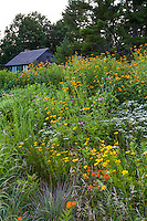 Connecticut meadow garden <br /> with native wildflowers; Larry Weaner Design