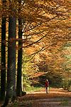 DEU, Deutschland, Bayern, Niederbayern, Naturpark Bayerischer Wald, Herbstlandschaft, Waldweg, Frau wandert mit Wanderstoecken   DEU, Germany, Bavaria, Lower-Bavaria, Nature Park Bavarian Forest, autumn landscape, wood, forest, woman hiking