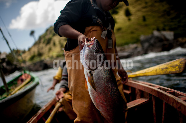"""Photo Essay on the life of the people Lafkenche, a part of the Mapuche indian nation from Southern Chile. Lafkenche mean """"peple from the sea"""", they live from Bio-Bio river towards the southern coast of the country, making a living as fishermen. Their traditions are strong and new groups of them are organizing to preserve their identityBonifacio cove, XIV Region of the Rivers. January 3, 2013.<br /> Gonzalo Quinan holding a Corvina 7K, captured during a day of 7 hours of navigational, where only two pieces of Corvina were captured."""