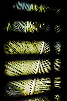 Palm leaves seen from thatched beach hut, Placencia, Belize