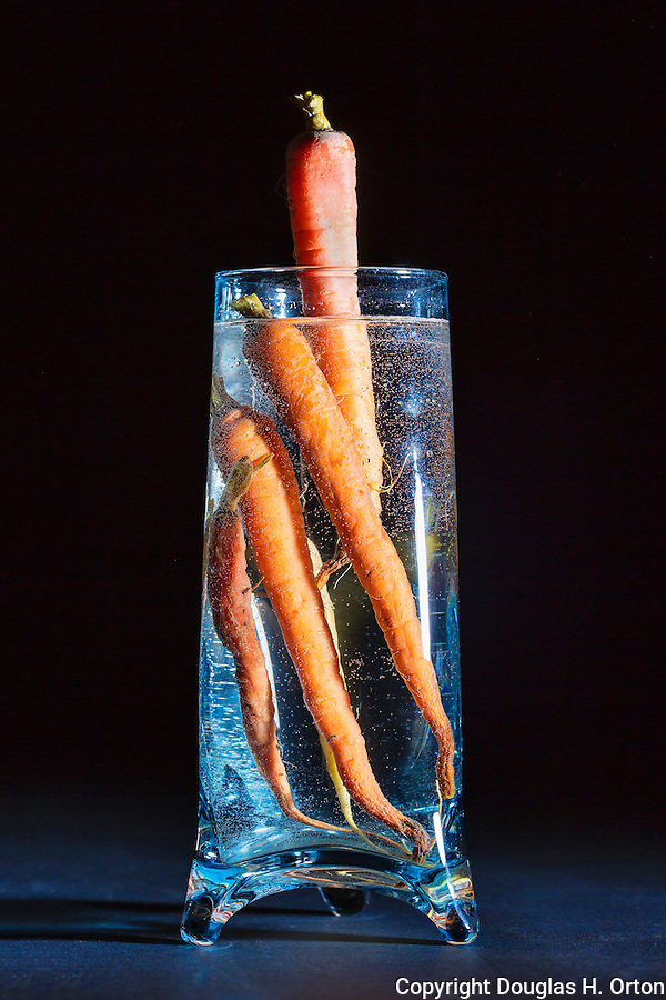 Fine Art image of old carrots in water filled vase.
