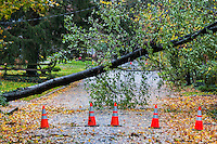 Hurricane Sandy tree and power line damage, Moorestown, New Jersey, USA