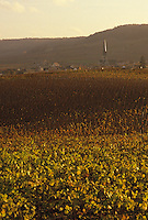 Europe/France/Champagne-Ardenne/51/Marne/Chamery : Vignoble champenois