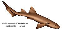 Nurse shark, Ginglymostoma cirratum, illustration by the artist Wyland