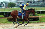 May 25, 2015 American Pharoah (ridden by Georgie Alvarez) galloped in the rain and mud at Churchill Downs during a special workout period for Belmont Stakes horses.  He flies to New York on June 2.  ©Mary M. Meek/ESW/CSM