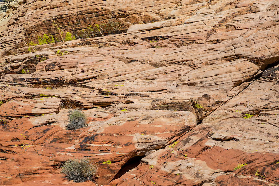 Red Rock Canyon, Nevada.  Red Sandstone showing  Cross-bedding from ancient Sand Dunes, along Trail to Calico Tanks.