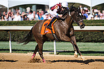 HOT SPRINGS, AR - March 18: Streamline #7 and jockey Chris Landeros win the Azeri Stakes (Gr.2) at Oaklawn Park on March 18, 2017 in Hot Springs, AR. (Photo by Ciara Bowen/Eclipse Sportswire/Getty Images)