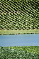 Europe/France/Aquitaine/40/Landes/Env de Puyol: le vignoble de Tursan