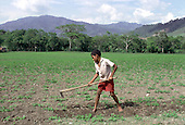 A ten-year-old field labourer hoes a field of beans in San Jose de Ocoa