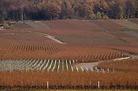 Europe/France/Champagne-Ardenne/51/Marne/Env Bouzy: Vignoble