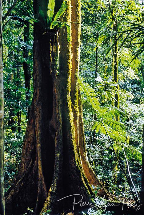 forêt des Koghis