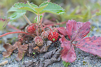 Tongass National Forest, Southeast, Alaska
