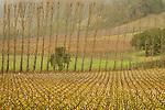 Vineyards in Northern California.