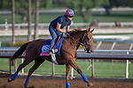 OCT 27 2014:Rainha Da Bateria, trained by Graham Motion, exercises in preparation for the Breeders' Cup Juvenile Fillies Turf at Santa Anita Race Course in Arcadia, California on October 27, 2014. Kazushi Ishida/ESW/CSM