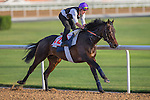 MEYDAN,DUBAI-MARCH 24: Vadamos,trained by Andre Fabre,exercises in preparation for the Dubai World Cup at Meydan Racecourse on March 24,2016 in Meydan,Dubai (Photo by Kaz Ishida)