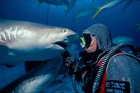 scuba diver in shark suit (shark handler) feeds fish to Caribbean reef shark, Carcharhinus perezii, Bahamas, Caribbean Sea, Atlantic