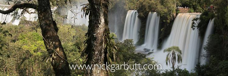 Forest at Iguasu Falls (also Iguazu Falls, Iguazú Falls, Iguassu Falls or Iguaçu Falls) on the Iguasu River, Brazil / Argentina border. Photographed from the Argentinian side of the Falls. Argentina.