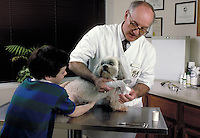 Veterinarian treats boy's dog