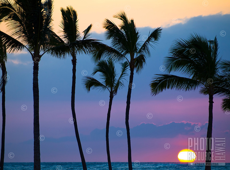 Palm trees are silhouetted by the setting sun at 'Anaeho'omalu Bay in Waikoloa, Big Island.