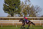 November 3, 2020: Audarya, trained by trainer James R. Fanshawe, exercises in preparation for the Breeders' Cup Filly & Mare Turf at Keeneland Racetrack in Lexington, Kentucky on November 3, 2020. Alex Evers/Eclipse Sportswire/Breeders Cup