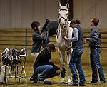 """April 25, 2014: Jockey Rosie Napravnik saddles up her off the track thoroughbred """"Sugar"""" during a demonstration at the Thoroughbreds For All event, sponsored by New Vocations, at West Wind Farm in Lexington, KY. Scott Serio/ESW/CSM"""