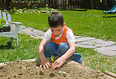 MR / Schenectady, NY. Boy (6) plants seedling in family garden in raised bed in back yard. MR: Jan2. ID: SPR. © Ellen B. Senisi