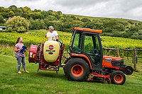 BNPS.co.uk (01202 558833)<br /> Pic: MaxWillcock/BNPS<br /> <br /> Pictured: Karen oversees Simon pouring cheese whey into their tractor tank.<br /> <br /> A bio-dynamic vineyard has found a way to use the perfect pairing of cheese and wine to protect its grapes.<br /> <br /> Little Waddon Vineyard is trialling using whey left over from the cheese-making process as a natural fungicide to treat downy mildew.<br /> <br /> The organic vineyard in Dorset decided to give the new method a try after a wet and dismal summer saw its vines get infected.