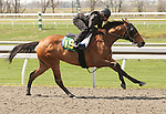 07 April 2011.  Hip #19 Empire Maker - Melody Que (IRE) filly consigned by Kirkwood Stables.