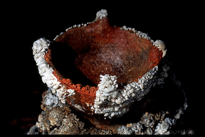 A clay bowl, thought to have been used to hold buring oil for illumination, rests where it was found deep inside the interior of Hoq cave in Socotra, Yemen on Monday, 16 May 2005. The white crystals are minerals that have grown on the bowl over many years was it was left untouched in the cave.<br />