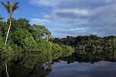 Amazon, Brazil. Forested banks of the Rio Negro; trees reflected on the water.