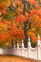 fence, fall, Bennington, VT, Vermont, A white fence surrounded by colorful foliage in Bennington in autumn.