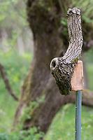 Astloch, Baumhöhle wird zu einem Vogel-Nistkasten erweitert, Naturhöhle, Selbstgebaute Holz-Nistkästen, Nistkasten für Vögel aus Holz, Vogelkasten, Meisenkasten selber bauen, Basteln, Bastelei, selbst bauen, selbermachen, selbstmachen