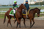 HALLANDALE BEACH, FL  JANUARY 27: #12 Giant Expectations ridden by Gary Stevens, in the post parade of the Pegasus World Cup Invitational, at Gulfstream Park Race Track on January 27, 2018,  in Hallandale Beach, Florida. (Photo by Casey Phillips/ Eclipse Sportswire/ Getty Images)