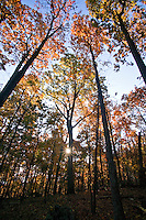 Autumn Forest and sunstar at Humpback Rocks, Blue Ridge Parkway, Virginia
