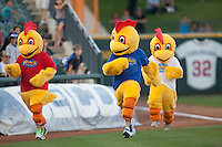 Round Rock Express chicken race during the Pacific Coast League baseball game against the New Orleans Zephyrs on May 2, 2012 at The Dell Diamond in Round Rock, Texas. The Express defeated the Zephyrs 10-5. (Andrew Woolley / Four Seam Images)