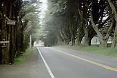 Tunnel Through Trees