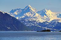 Brandt geese migrate through northern prince William sound, Mt Gilbert of the Chugach mountains, Alaska