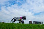TOYOAKE,JAPAN-JUL 7: Arctos,ridden by Hironobu Tanabe, after winning the Procyon Stakes at Chukyo Racecourse on July 7,2019 in Toyoake,Aichi,Japan. Kaz Ishida/Eclipse Sportswire/CSM