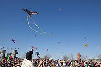 Zilker Park Kite Festival - Stock Photo Image Gallery